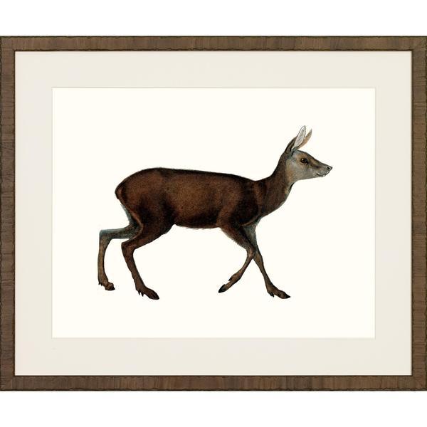 American Mammals Framed Art Print IV