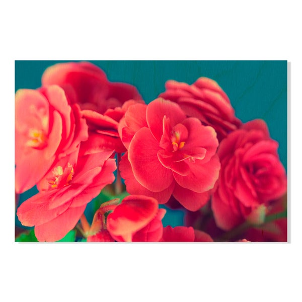 begonia flower on blue background Print on Birchwood Wall Art