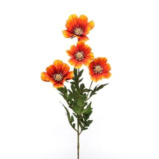 Orange Cosmos x 4 with 8 Leaves