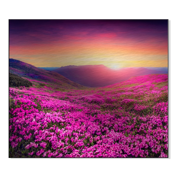 Magic pink rhododendron flowers in the mountains. Print on Mounted Metal Wall Art