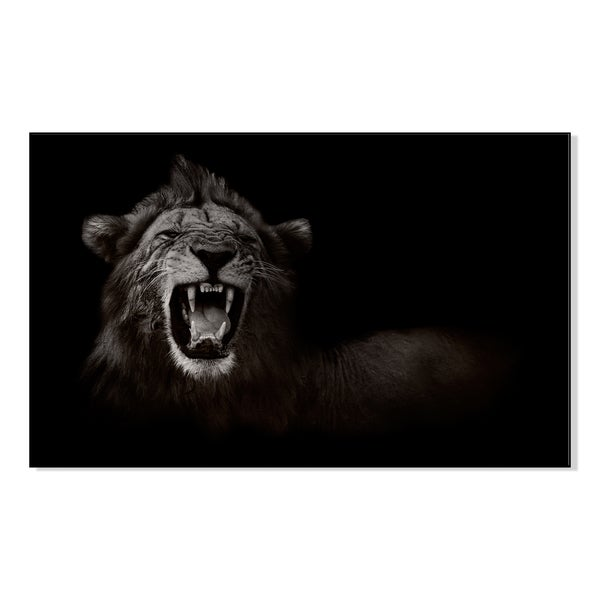 Lion displaying dangerous teeth Print on Mounted Metal Wall Art