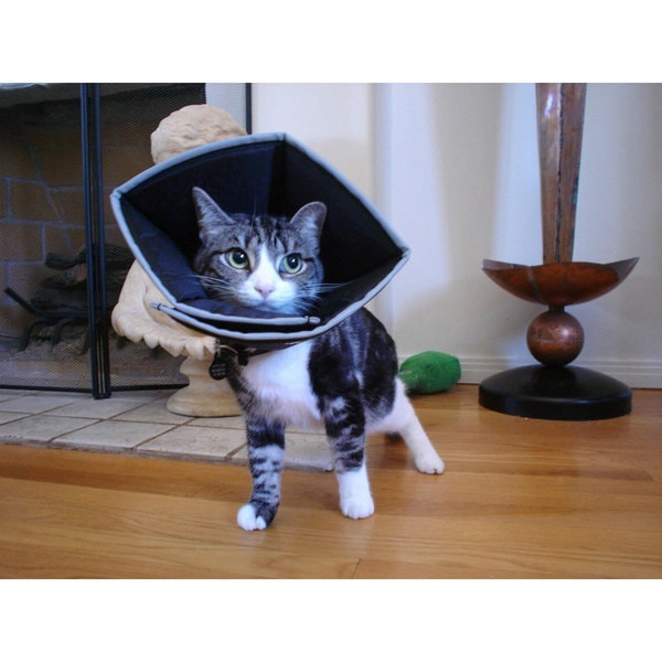 Comfy Cone Pet E-Collar Small
