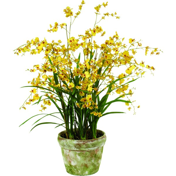 Dancing Orchids In Terracotta Pot 40 Inch Tall Yellow