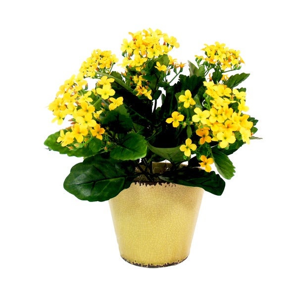 Yellow Kalanchoe In Yellow Ceramic Pot