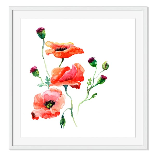 Poppy Flower in Watercolor Print on Paper Framed Print