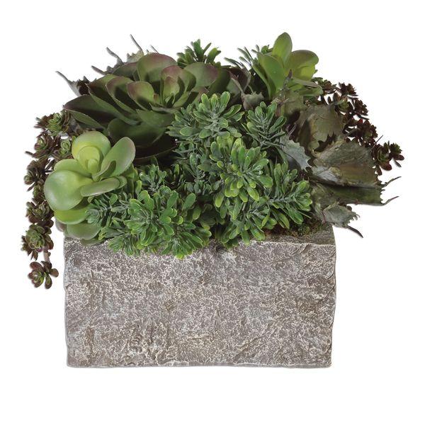 Black Rock Desert Succulents