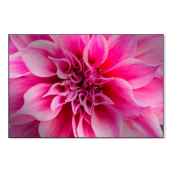 Pink Dahlia Print on Mounted Metal Wall Art 17055289