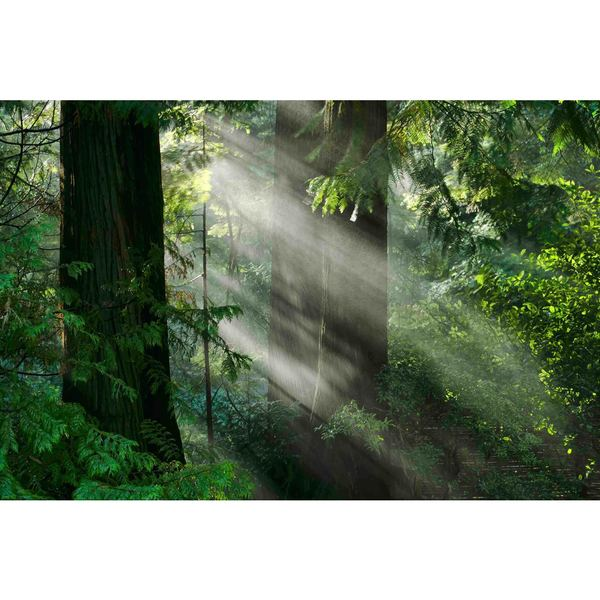 "Marmont Hill - ""Light Through the Trees"" Painting Print on Canvas"