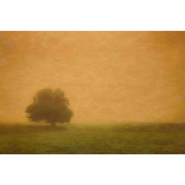 "Marmont Hill - ""Silent and Still"" Painting Print on Canvas"