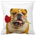 English Bulldog With a Rose 16-inch Throw Pillow
