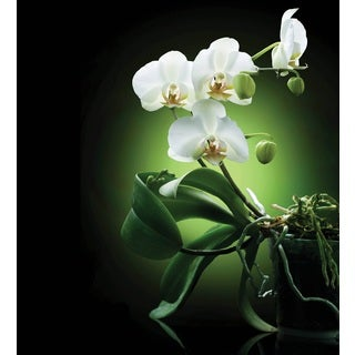 Selections by Chaumont Glass Art Orchids