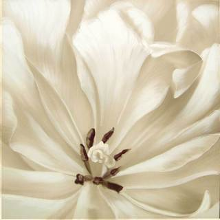 Selections by Chaumont White Rose Canvas
