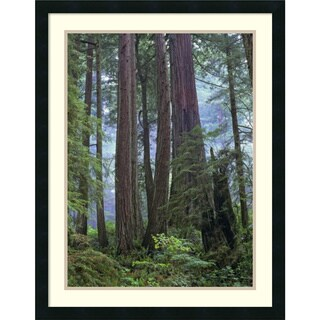 Tim Fitzharris 'Old growth forest of Coast Redwood stand Del Norte Coast Redwoods California' Framed Art Print 24 x 30-inch