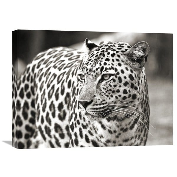 Big Canvas Co. Claudia Lothering 'Portrait of Leopard, South Africa' Stretched Canvas Artwork