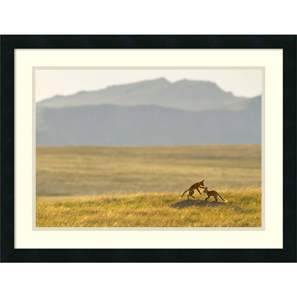 Jason Savage 'Montana Fox Kits' Framed Art Print 26 x 20-inch