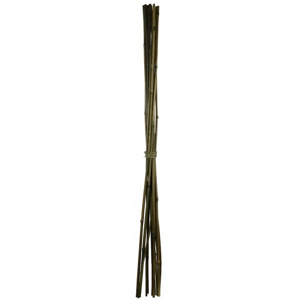 Bamboo Green (Pack of 12)