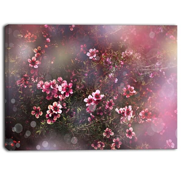 Designart - Sakura Japanese Cherry - Photography Floral Canvas Print