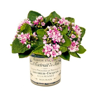 Creative Displays 9-inch Pink Kalanchoe Floral In French Vase