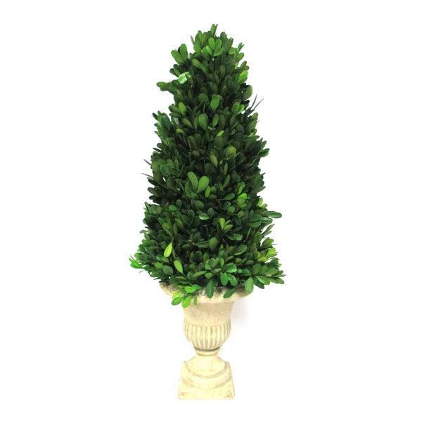 Preserved Collection 21-inch Boxwood Topiary