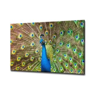 Bruce Bain 'Peacock' ArtPlexi by Ready2HangArt