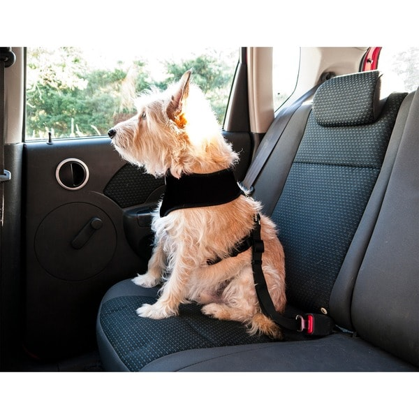 Furhaven Car Seat Clip Dog Harness & Leash