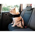 Furhaven Car Seat Clip Dog Harness & Leash