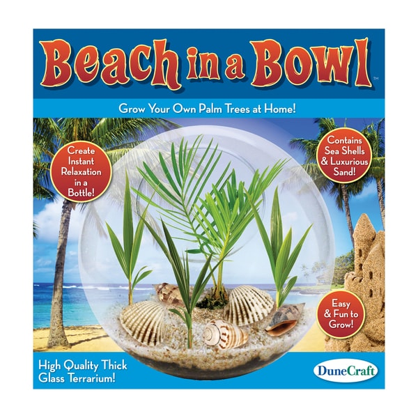 Glass Terrarium Beach in a Bowl