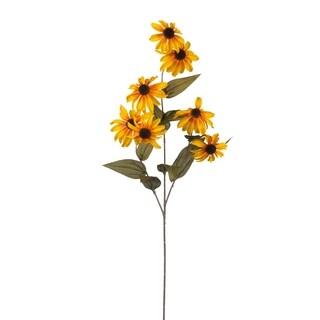 4-flower Black Eyed Susan (Pack of 6)