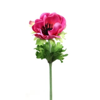 Pink 13.5-inch Anemone Cutting (Pack of 6)