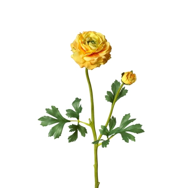 Ranunculus Stem (Pack of 12)