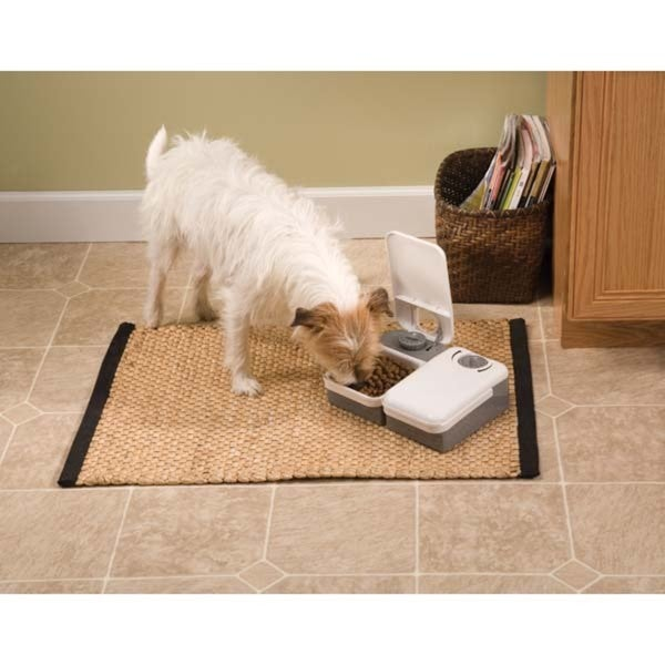 PetSafe 2 Meal Pet Feeder Gray