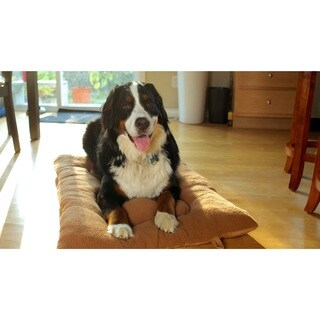Furhaven Pet NAP Reversible Tufted Pillow Crate Dog Bed