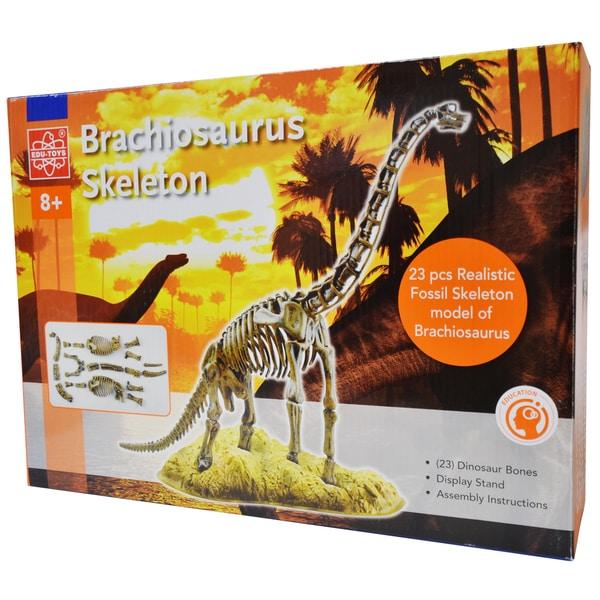 EDU-Toys Brachiosaurus Skeleton
