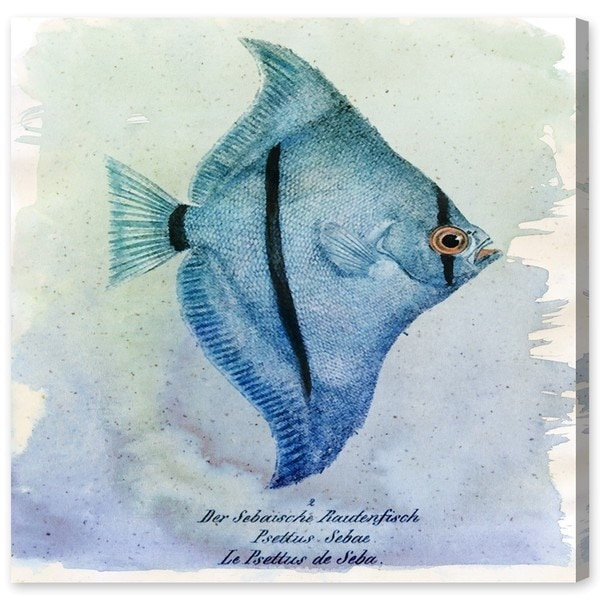 Canyon Gallery 'Seba Fish' Canvas Art