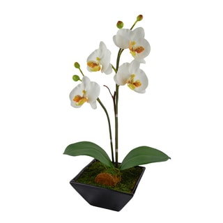 Red Vanilla White Orchid Ceramic Centerpiece With Black Base (17 x 6)