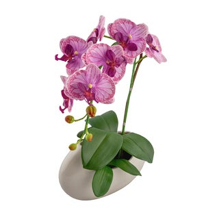 Phalaenopsis 17-inch x 9.75-inch Lavender Orchid with White Cylinder Vase