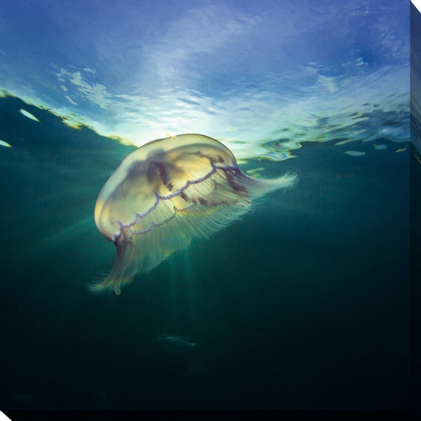 Craig Dietrich 'Jelly Key Largo' Underwater Photography Canvas Wall Art