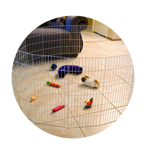 Ware Silver Wire 56-inch x 56-inch x 24.25-inch Small Animal Excercise Playpen