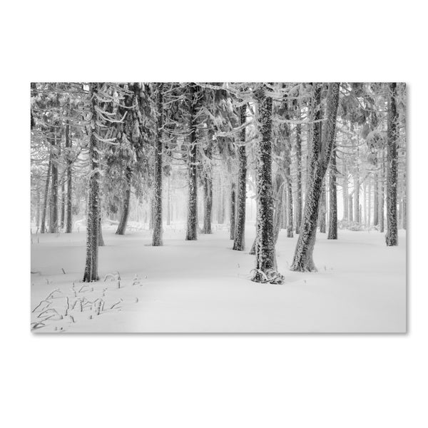 Philippe Sainte-Laudy 'Frozen World' Canvas Art