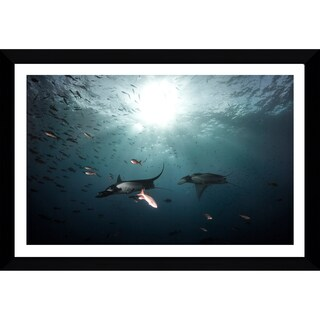 Craig Dietrich 'Follow the Leader' Framed Plexiglass Underwater Photography
