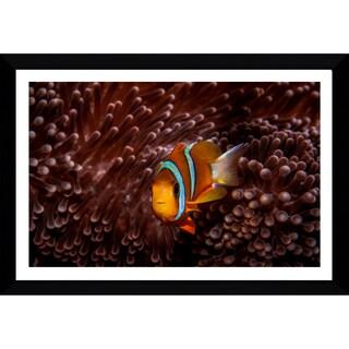 Craig Dietrich 'Red Velvet' Framed Plexiglass Underwater Photography