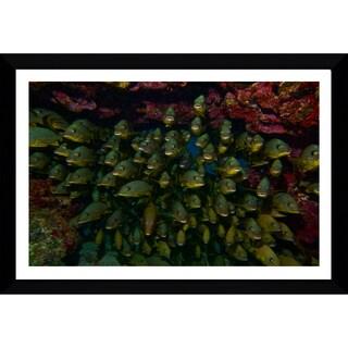 Craig Dietrich 'Underwater Traffic' Framed Plexiglass Underwater Photography