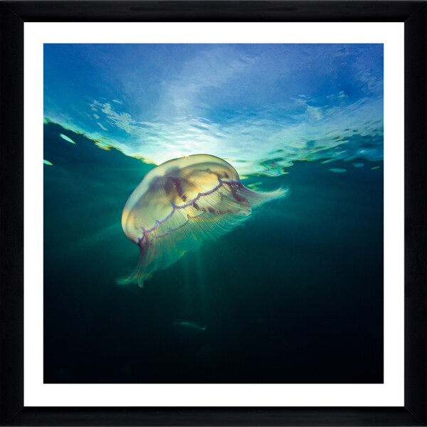 Craig Dietrich 'Jelly Key Largo' Framed Plexiglass Underwater Photography