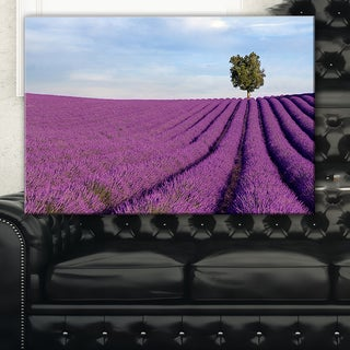 Lavender Field with Solitary Tree - Landscape Photo Canvas Print - Purple