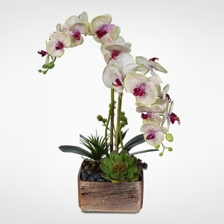 Real Touch Phalaenopsis Orchid with Succulents in Ceramic Pot