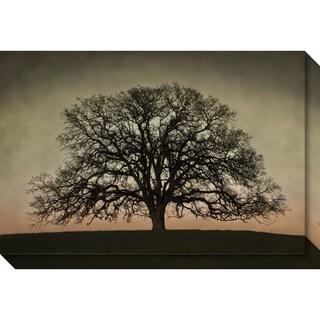 Canvas Art Gallery Wrap 'Majestic Oak' by David Lorenz Winston 30 x 20-inch
