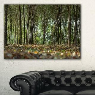 Dense Rubber Tree Plantation - Landscape Art Print Canvas