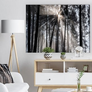 Sunbeams through Black White Forest - Forest Canvas Wall Art Print