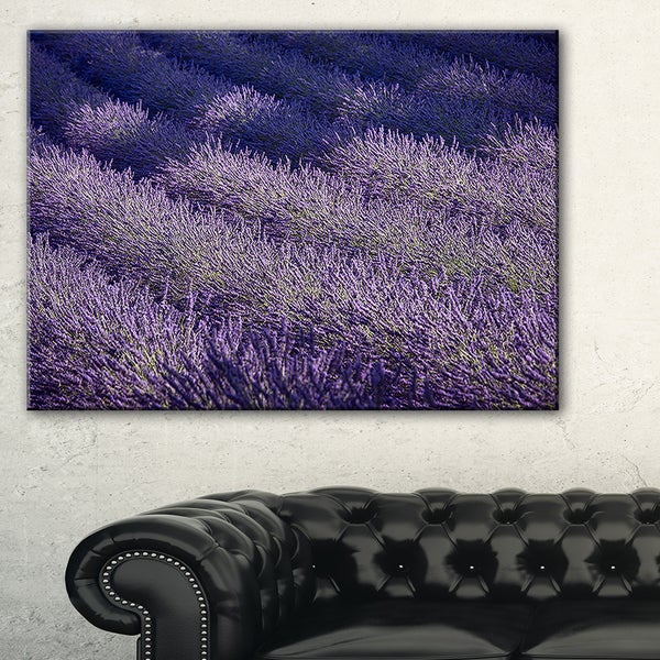 Lavender Field and Ray of Light - Oversized Landscape Wall Art Print 19601538