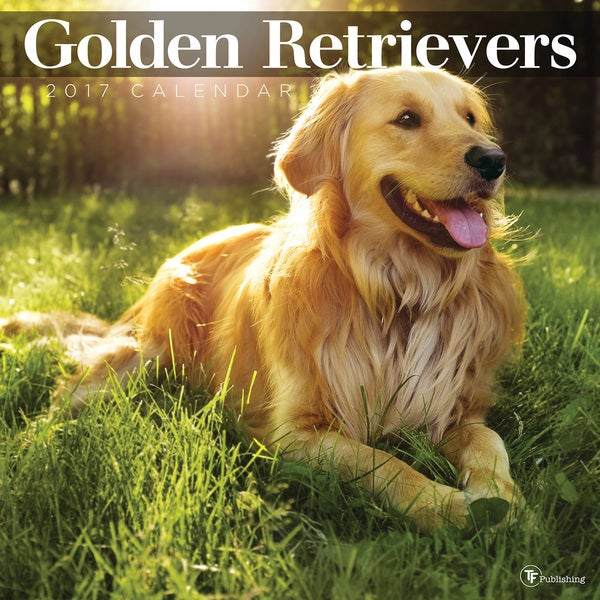 2017 Golden Retrievers Wall Calendar